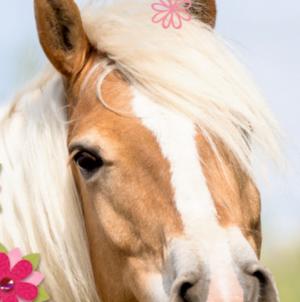 Pferdewelt, Einhornwelt